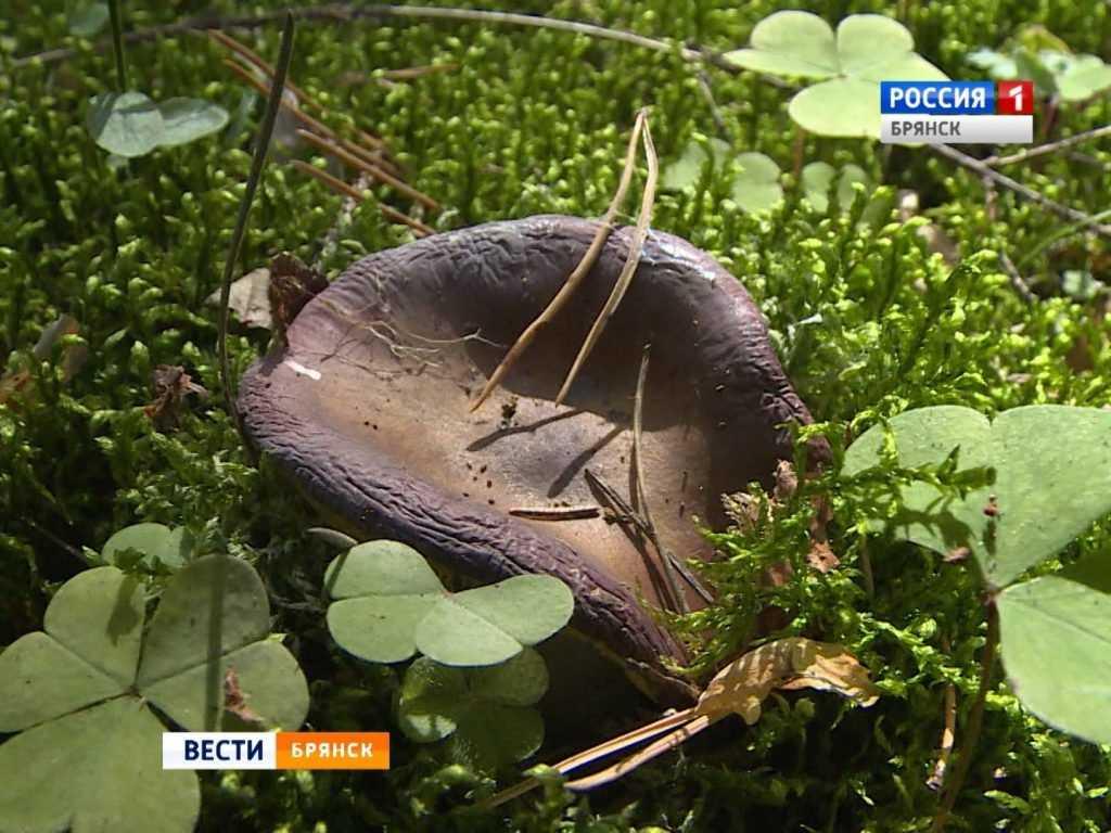 В Брянской области открыли грибной сезон