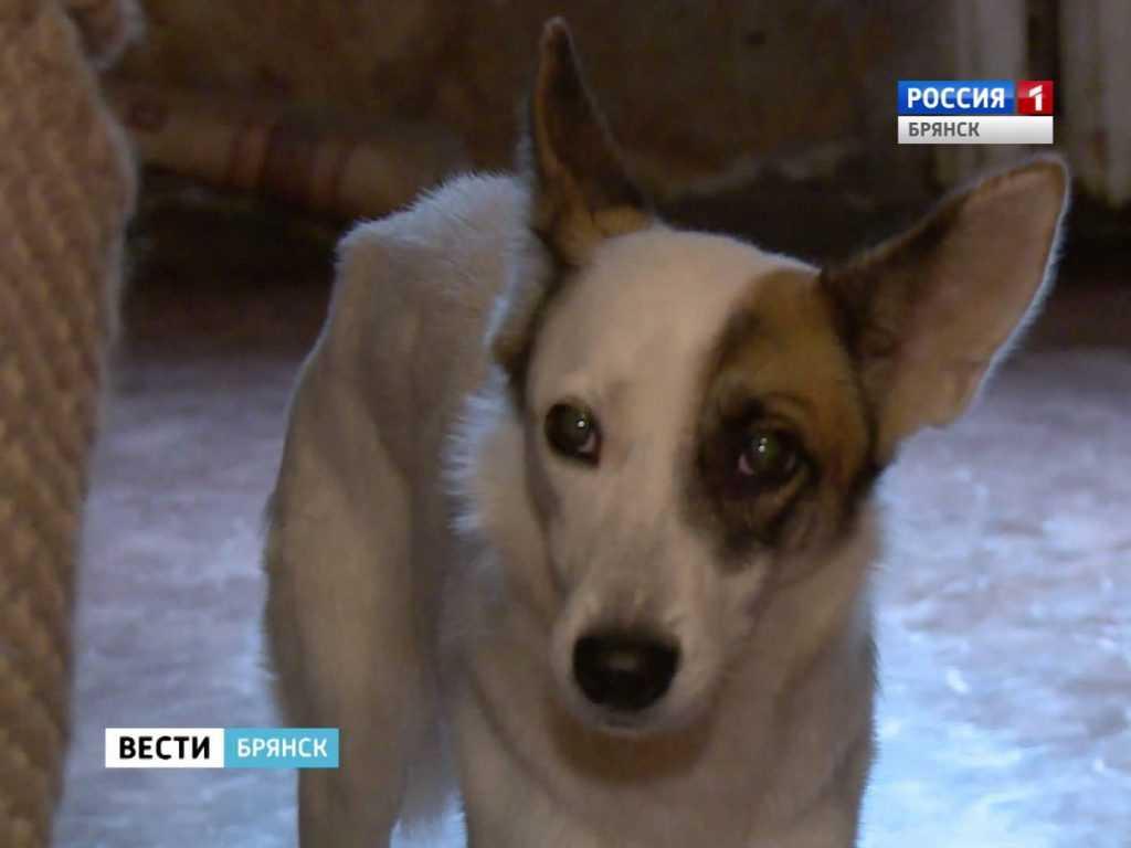 В Брянске женщину выселяют из-за собак