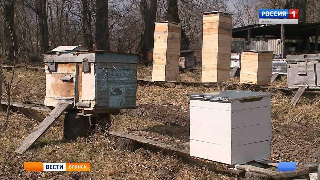 Пчеловоды Брянщины готовятся к сезону