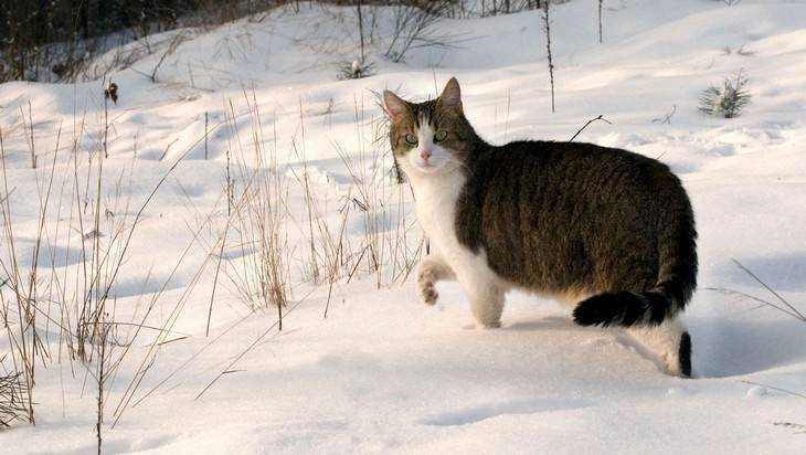 В Брянске растут стихийные снежные свалки
