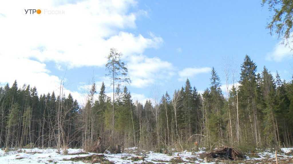 В Брянской области претворят в жизнь экологический проект